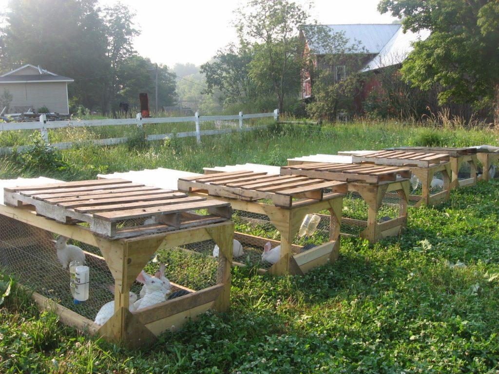 preparing for meat rabbits the elliott homestead