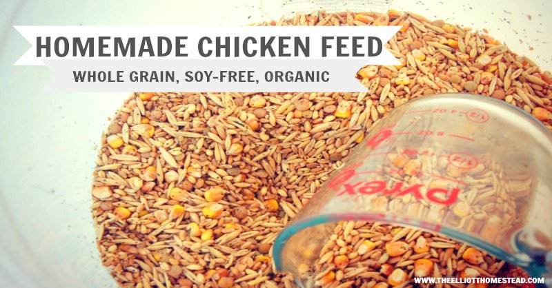 Organic Homemade Chicken Feed | The Elliott Homestead (.com)