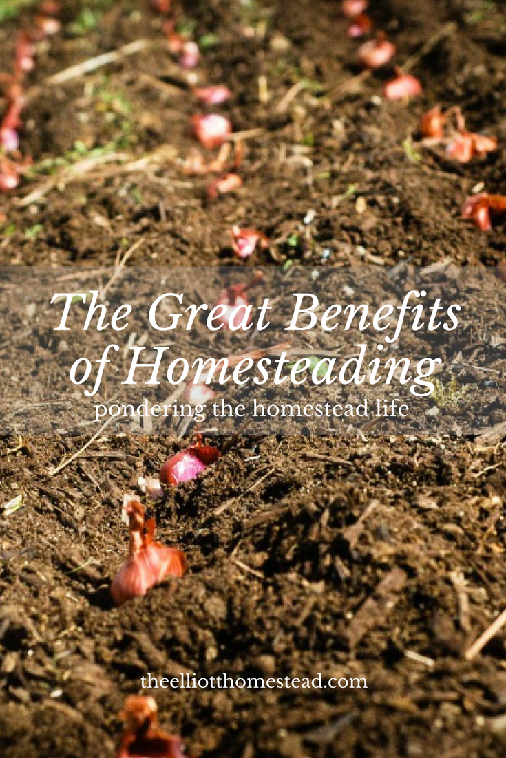 The Great Benefits of Homesteading