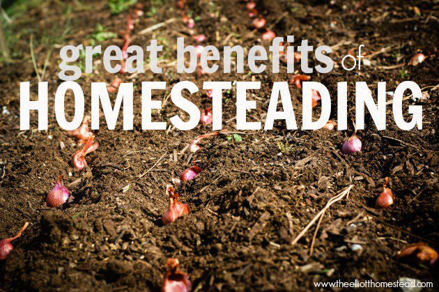 Great Benefits of Homesteading.