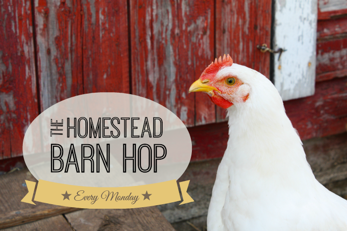 Homestead Barn Hop | The Elliott Homestead