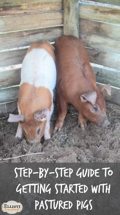 Step-by-Step Guide to Getting Started With Pastured Pigs | The Elliott Homestead (.com)