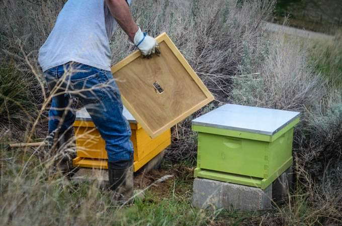 man arranging beehives with top boards and lids
