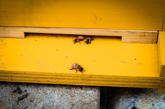 three bees sitting on the entrance of a hive painted yellow