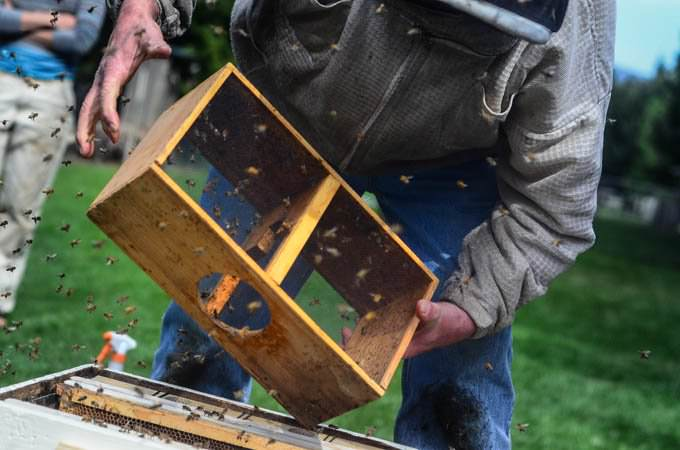 Beekeeping 101: Hiving The Bees and Homemade Sugar Syrup