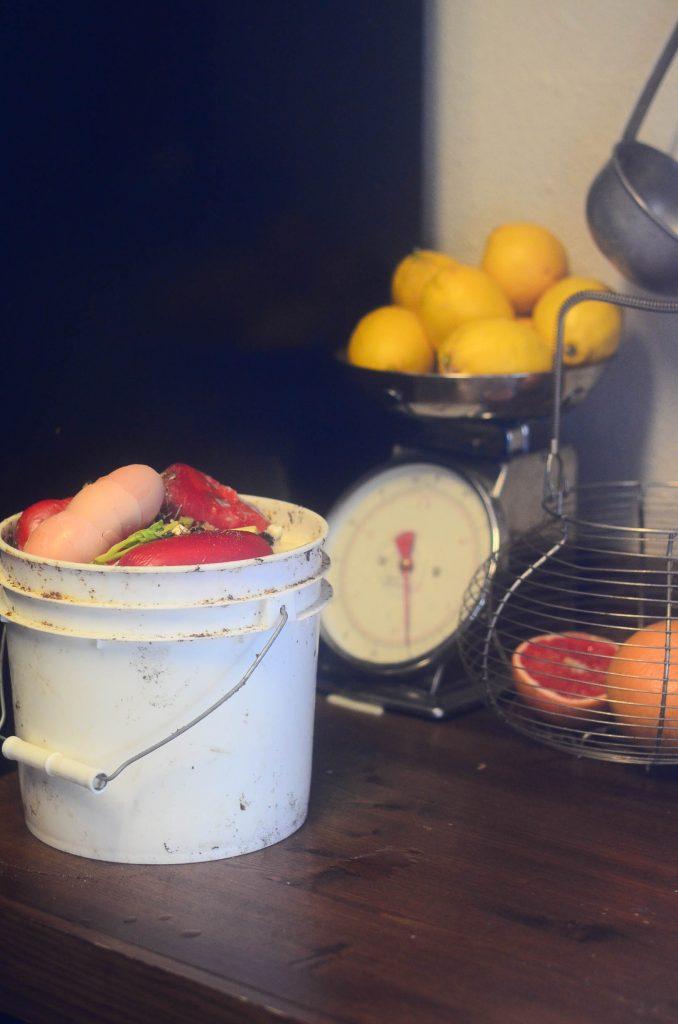 Feeding The Pigs | The Elliott Homestead (.com)