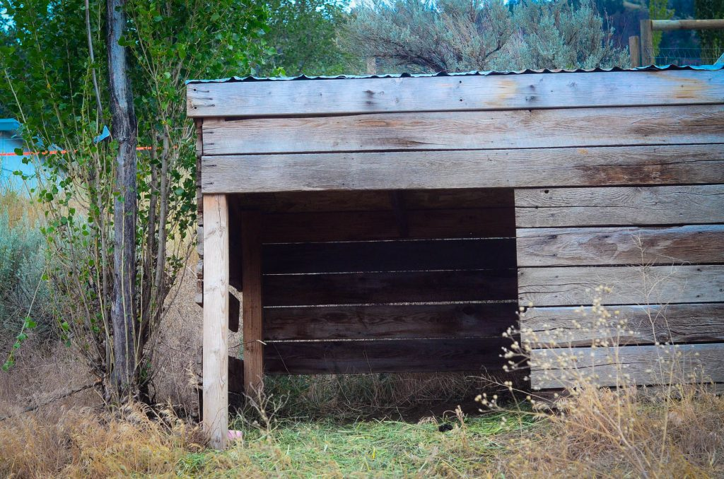 Preparing for Sheep On The Farm | The Elliott Homestead (.com)