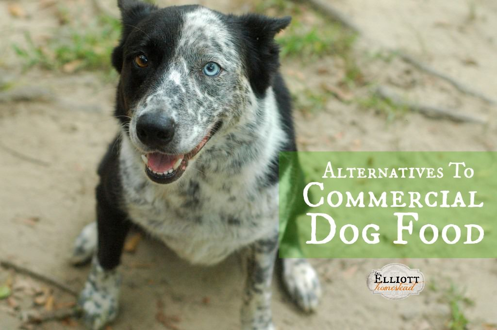 Alternatives To Commercial Dog Food | The Elliott Homestead (.com)
