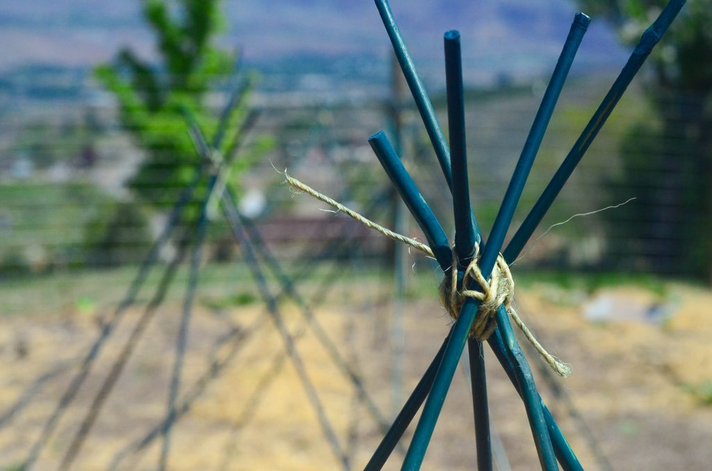 How To Build A Tomato Cage For Under $4 | The Elliott Homestead (.com)