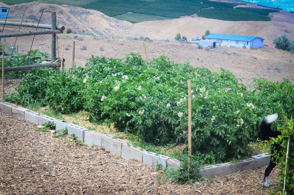 greenhouse plot around garden