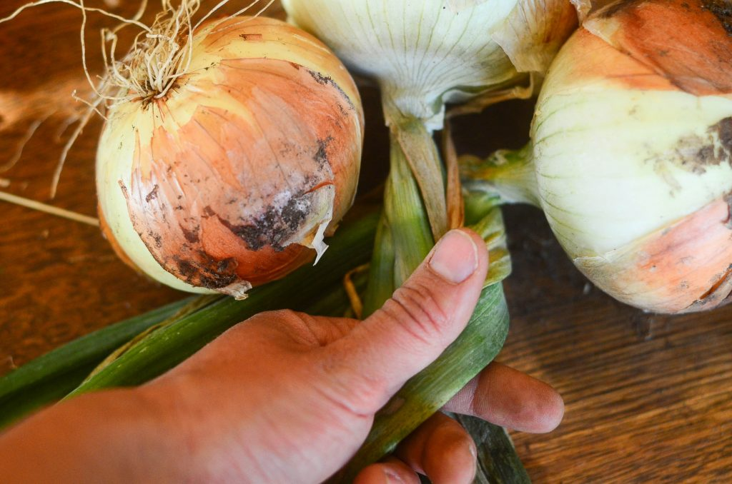 How to braid onions, Step 2