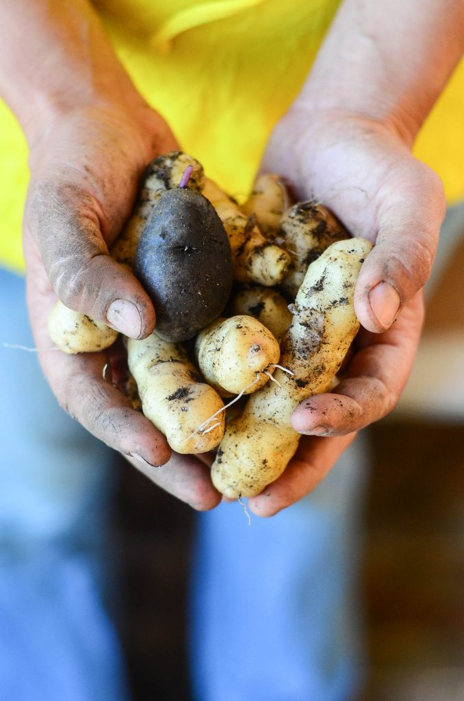 The taste of homegrown potatoes! WOW!