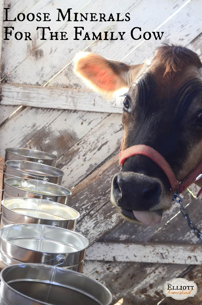 Loose Minerals for Dairy Cows   The Elliott Homestead (.com)