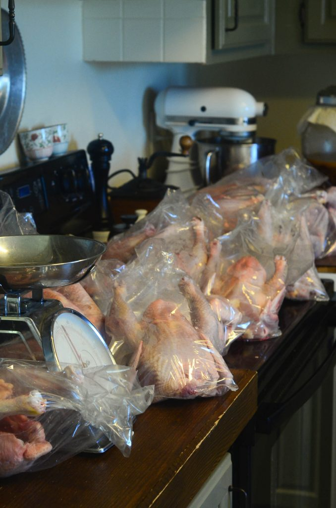 Chickens ready for the 'air-chill' step | The Elliott Homestead (.com)