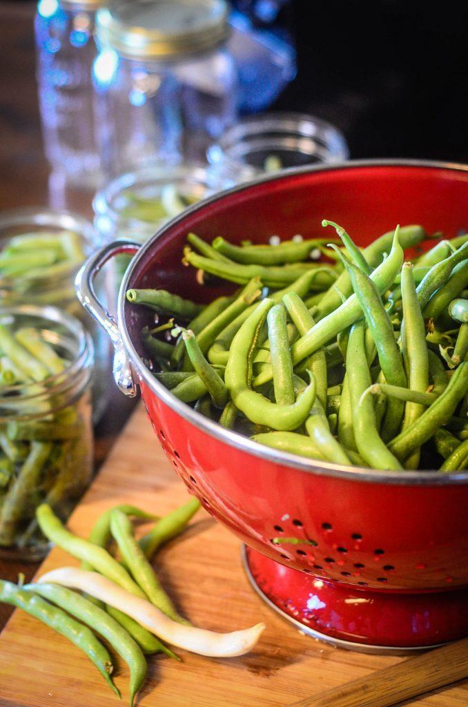 Fresh green beans from the gardens | The Elliott Homestead (.com)