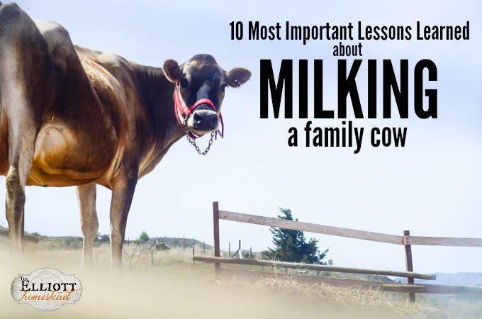 10 Most Important Lessons Learned About Milking A Family Cow | The Elliott Homestead (.com)