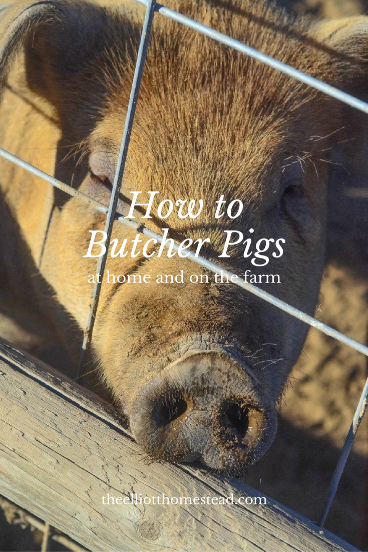 How to Butcher a Pig
