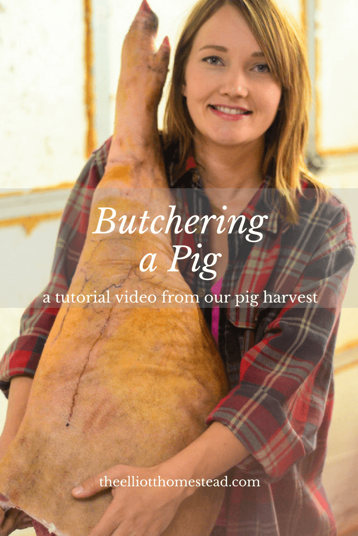 Butchering a pig   The Elliott Homestead