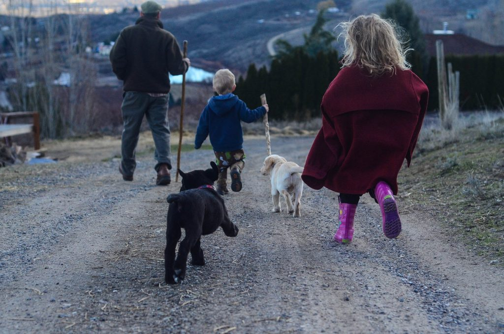 Things To Consider When Getting A Livestock Guardian Dog | The Elliott Homestead