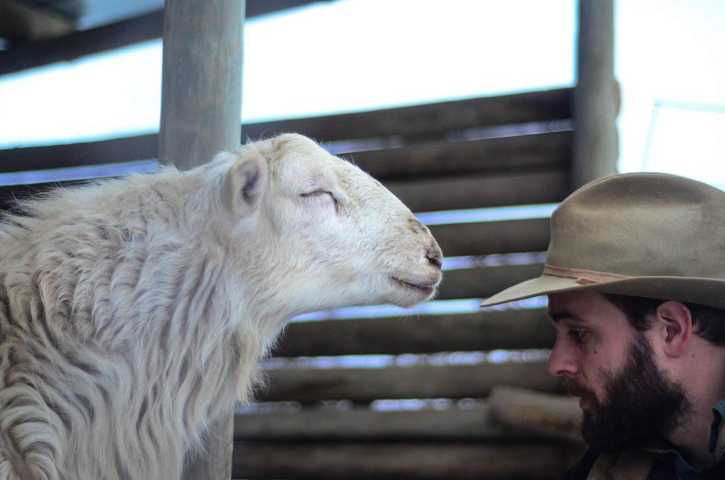 Step 2. Kill the lamb | The Elliott Homestead
