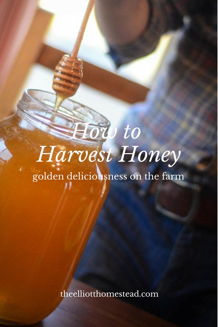 How To Harvest Honey | The Elliott Homestead (.com)