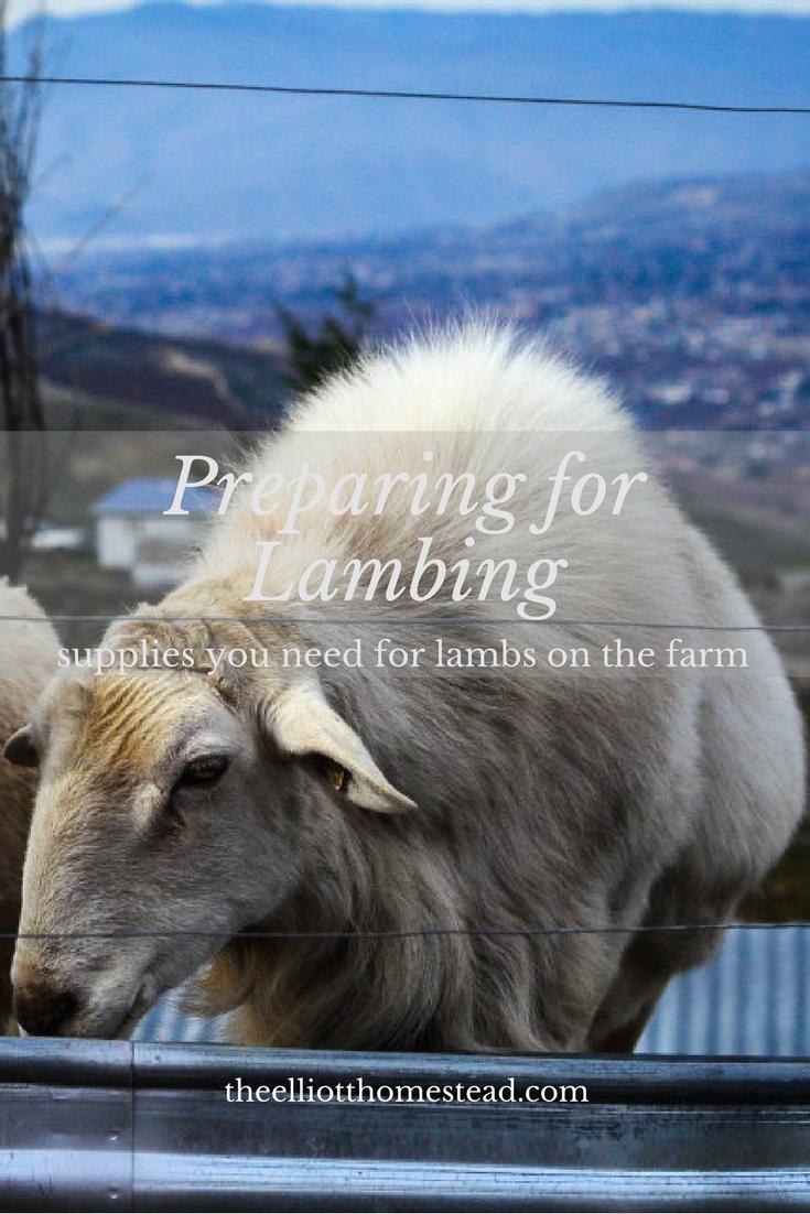 Preparing for Lambing   The Elliott Homestead
