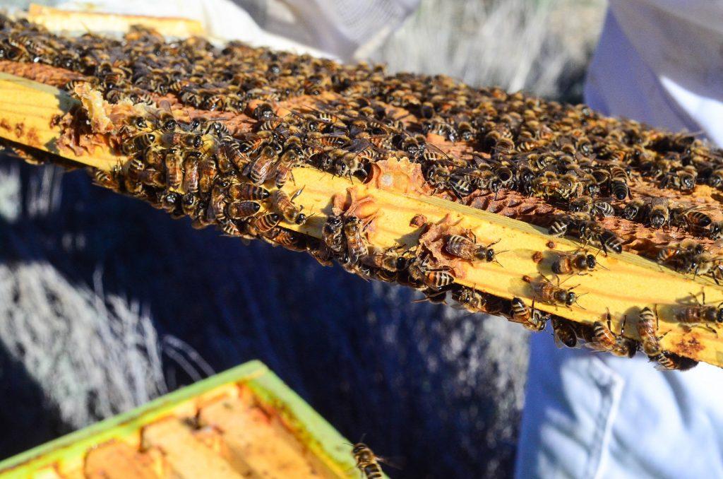 Springtime bee checking | The Elliott Homestead (.com)