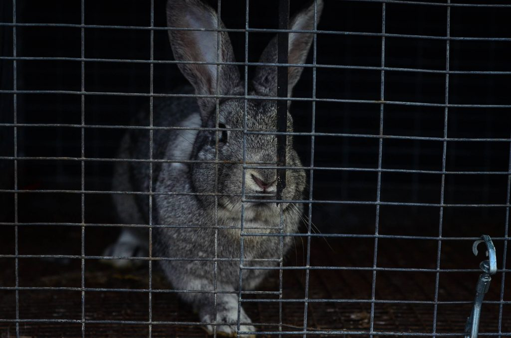 New line of meat rabbits | The Elliott Homestead
