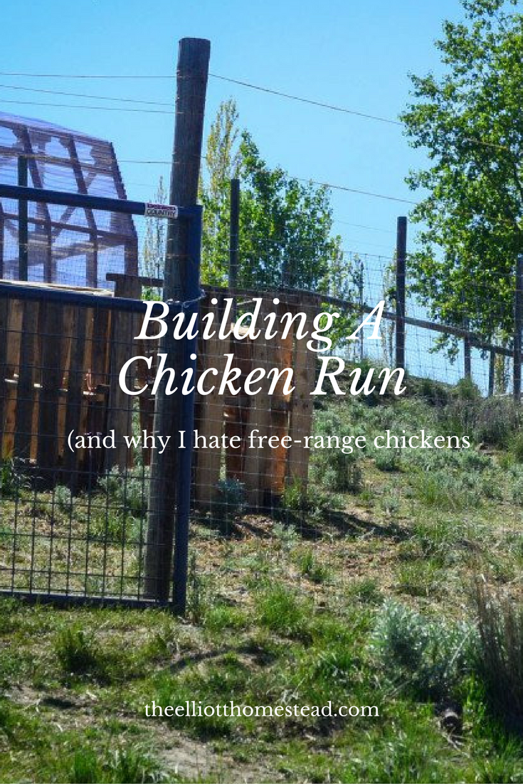 Building a Chicken Run