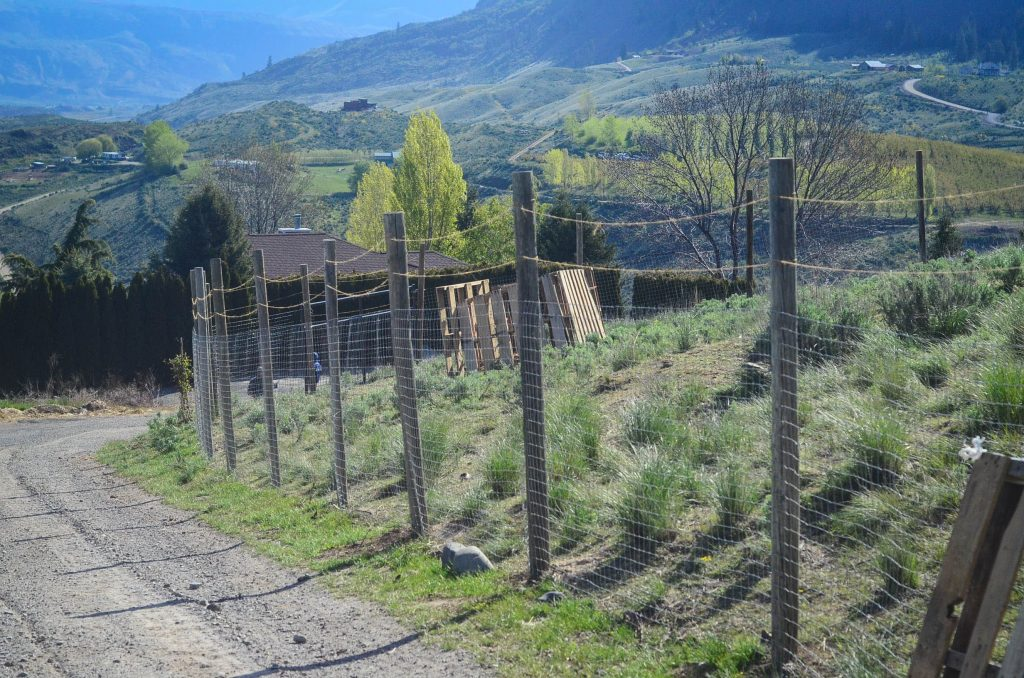 Building A Chicken Run (And Why I Hate Free Range Chickens