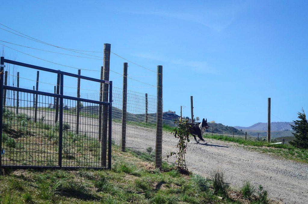 A wide opening gate for wheelbarrows on the chicken run   The Elliott Homestead