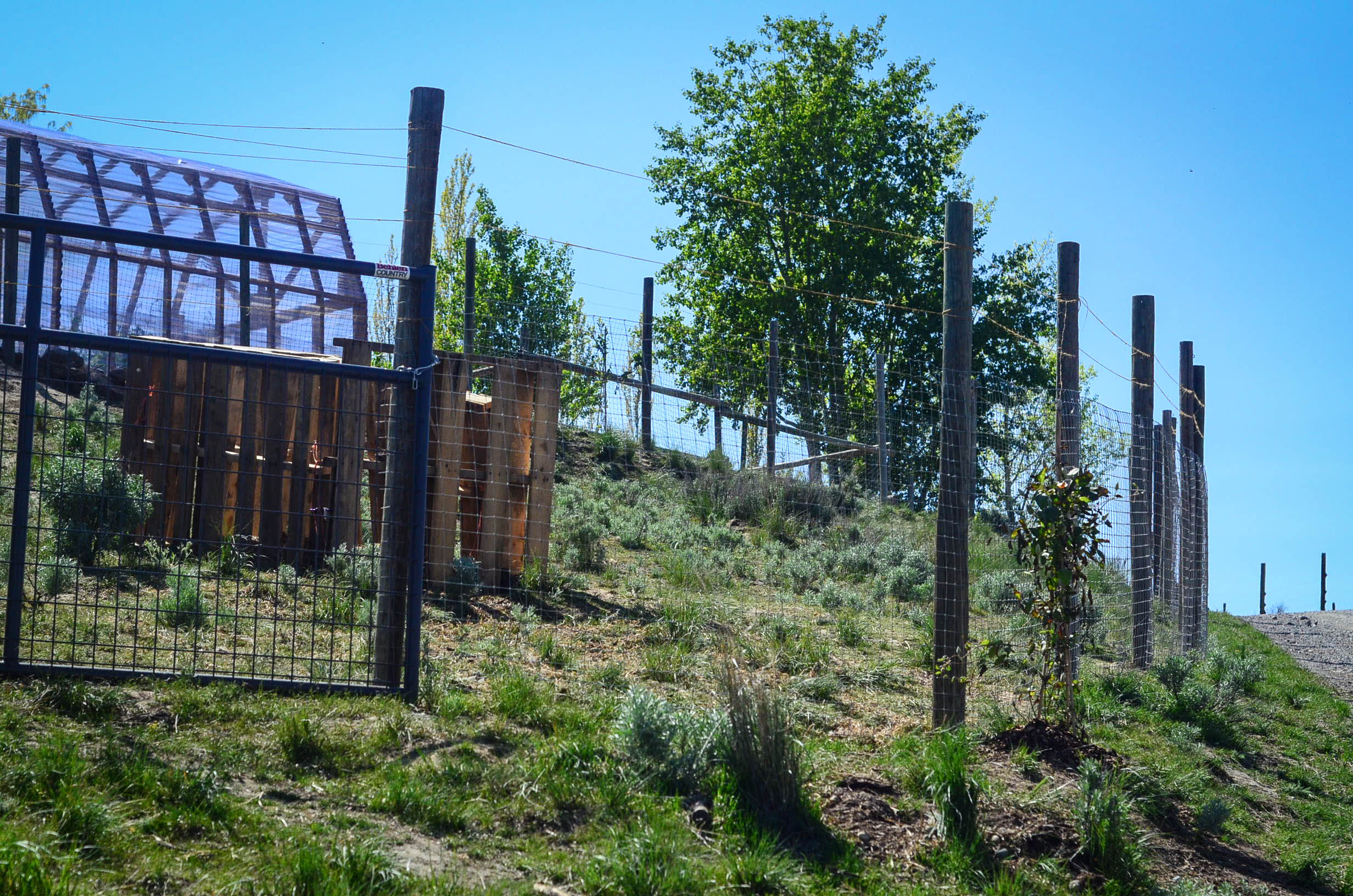 Building A Chicken Run And Why I Hate Free Range Chickens The Fourwire Electric Fence System Best Control Of Deer Access To Food Elliott Homestead