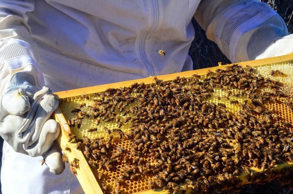 Honey Harvest | The Elliott Homestead