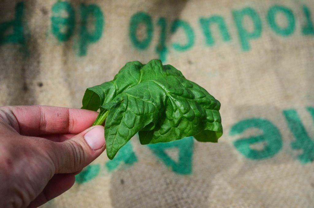 Preventing limp greens!   The Elliott Homestead