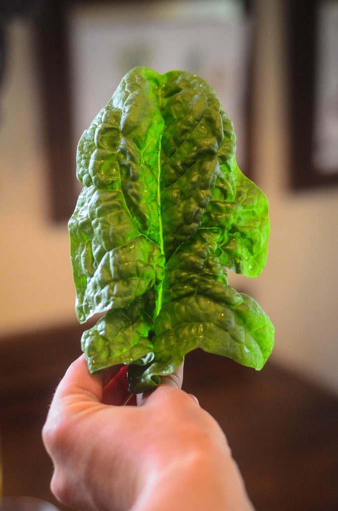 How to keep greens crisp! | The Elliott Homestead
