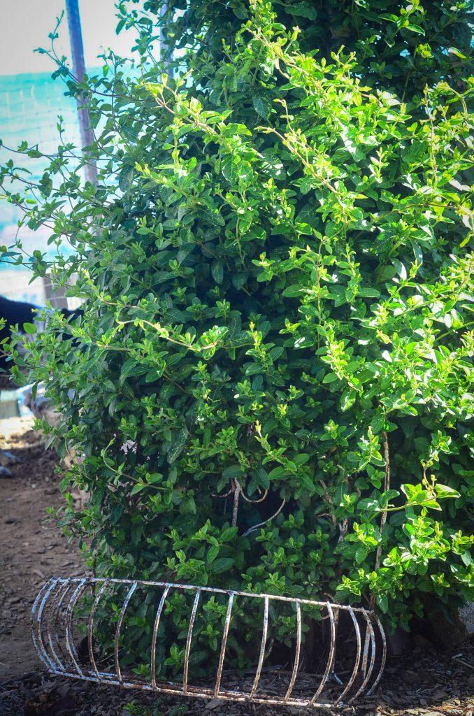 The beauty of a potager garden | The Elliott Homestead