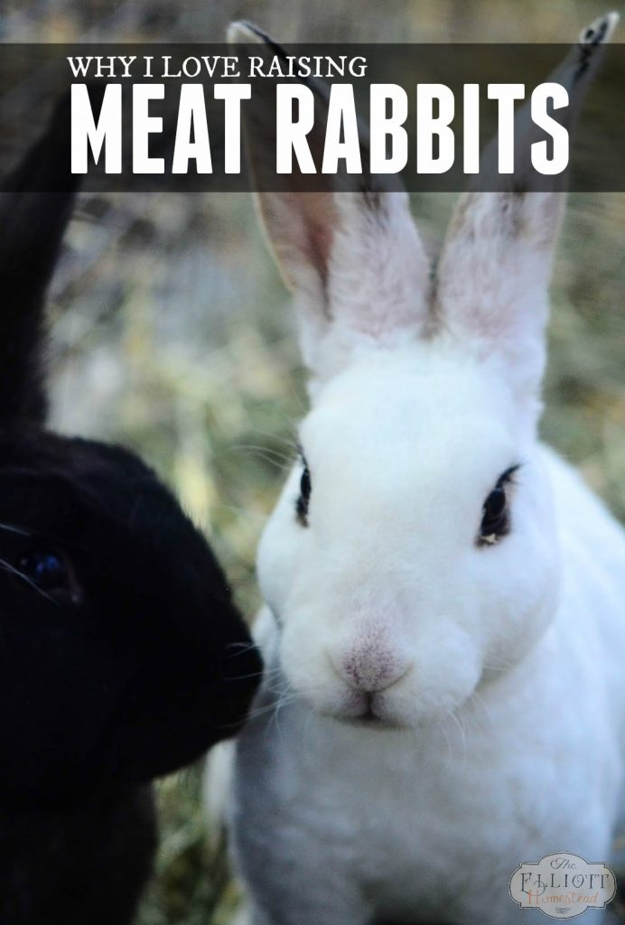 Why I Love Raising Meat Rabbits (and a peek at our rabbitry) | The Elliott Homestead