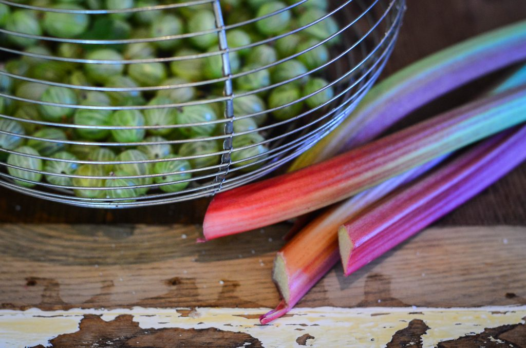 Gooseberries and rhubarb from the garden.
