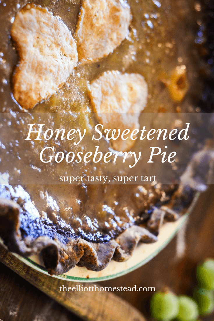 Honey Sweetened Gooseberry Pie Recipe | The Elliott Homestead