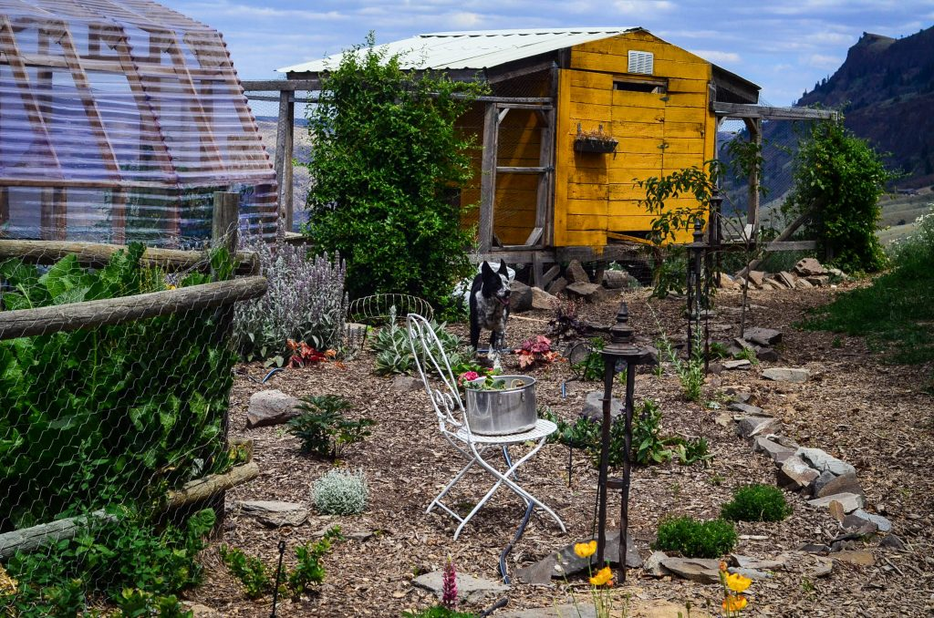 Old Chicken Coop | The Elliott Homestead