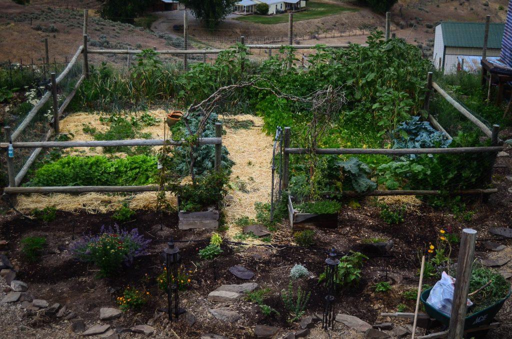 The Potager Garden: Assessing the progress!