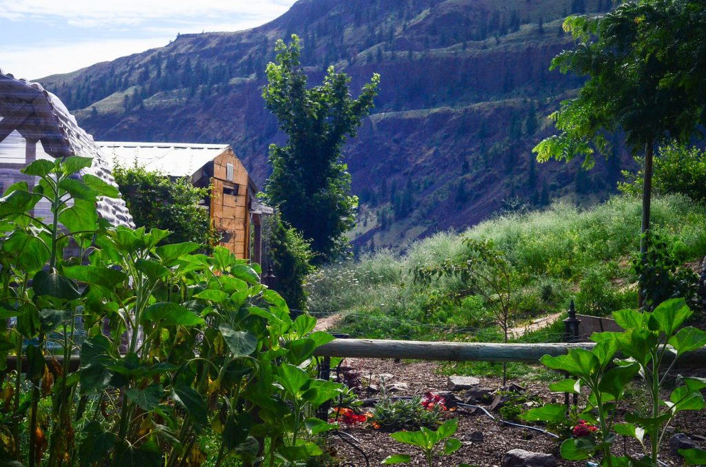 The view from the potager | The Elliott Homestead