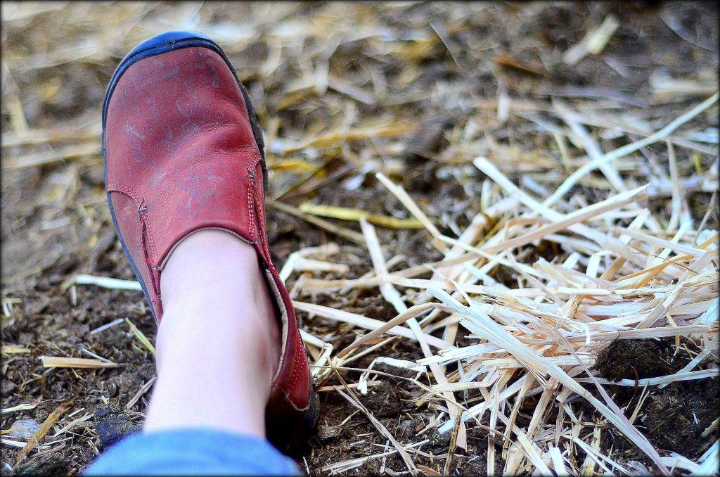 ...waiting on a calf... | The Elliott Homestead