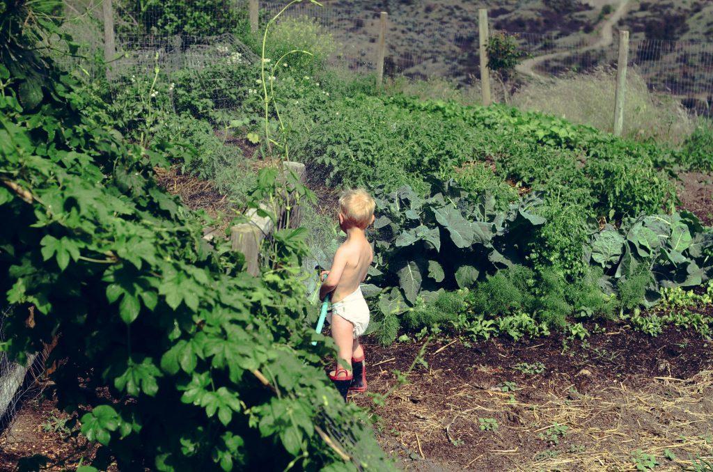 Unruly farm children....