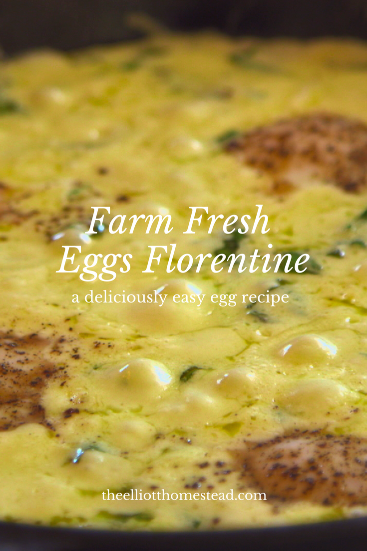 Farm Fresh Eggs Florentine