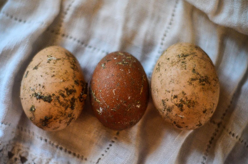 1. Get Poopy Eggs | The Elliott Homestead
