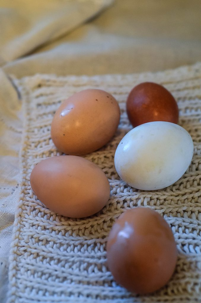 How To Wash Eggs (Dry and Water Method) | The Elliott Homestead