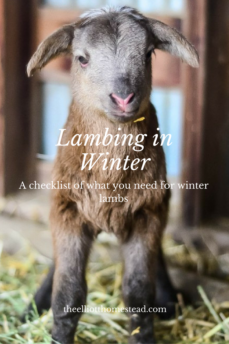 Lambing in Winter (a checklist of what you need) theelliotthomestead.com