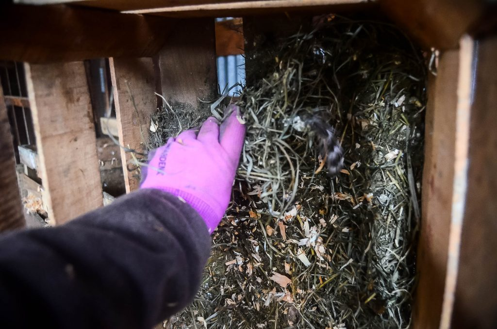 Cleaning nesting boxes: Step 1 | The Elliott Homestead
