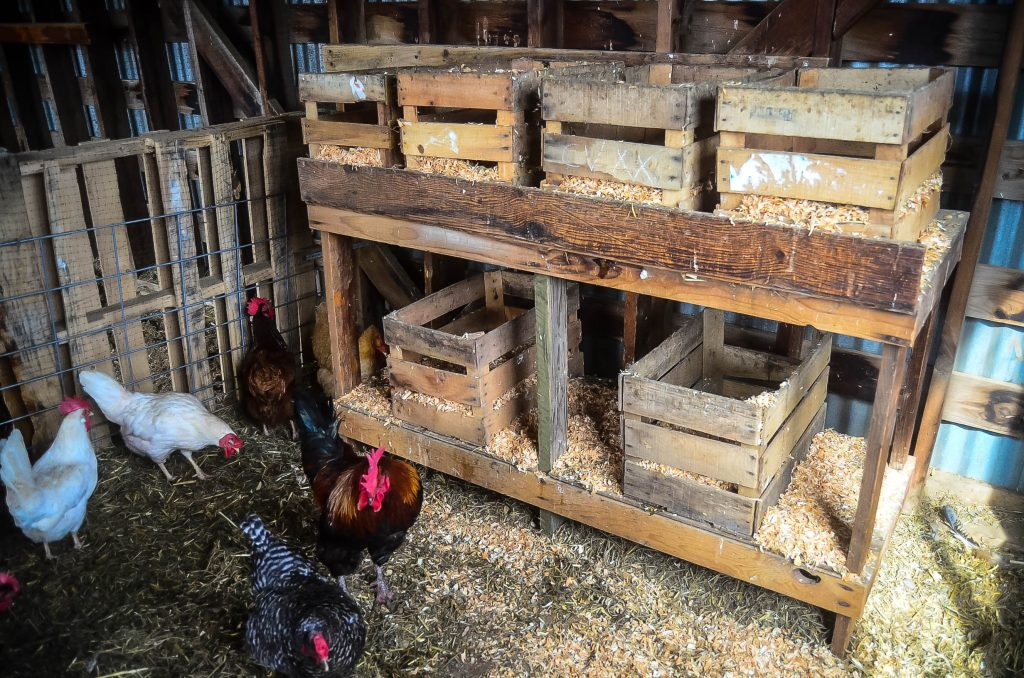 Easiest Nesting Boxes EVER! | The Elliott Homestead